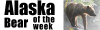 Alaska Bear of the week